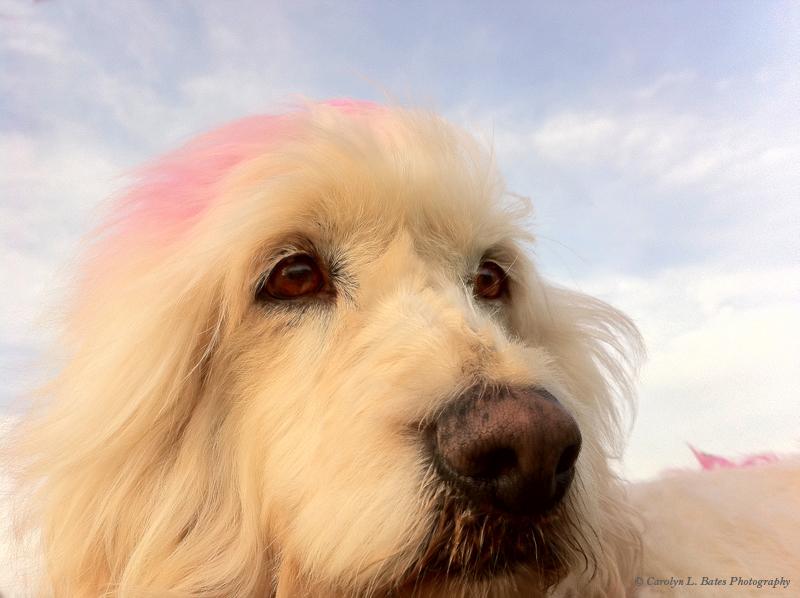 fourseasons-dog-portraits-summer-carolynbates-6