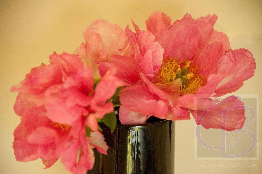 flower-peopny-2012af_BAT8325-sh-web-srgb-wtrmk.jpg