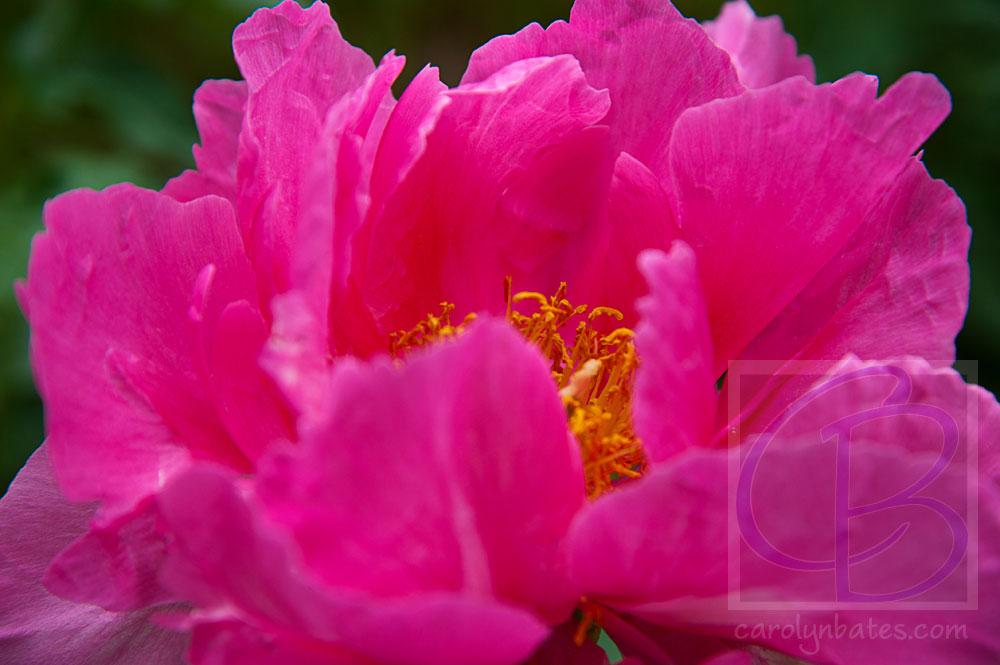 flowers_BAT8204-2012af-sh-web-srgb-wtrmk.jpg