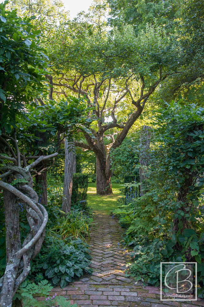 Into the Woods: A Garden Tour of Gordon and Mary Hayward's Garden