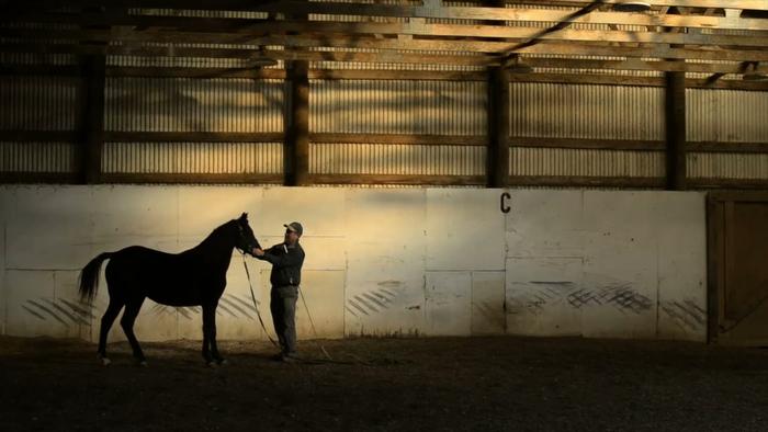 Vermont Morgan Horse Photography by Brett Simison