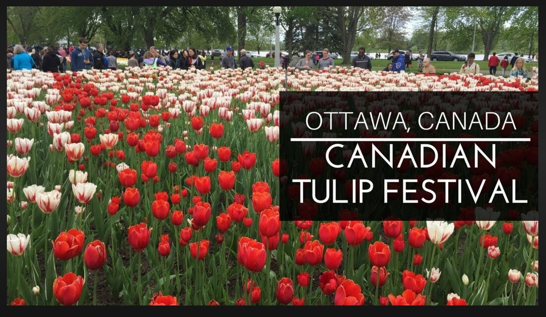 Join The Burlington Garden Club on a colorful trip as we walk through the tulips!